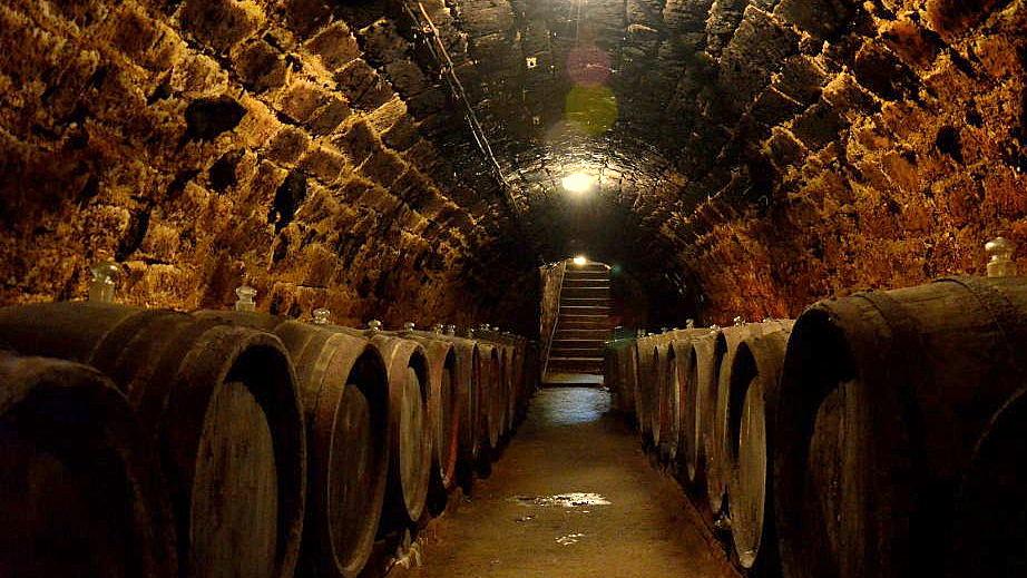 tokaj wijngebied hongarije 07
